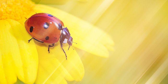 てんとう虫は幸せのメッセンジャー