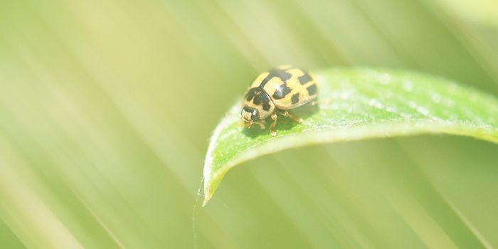 てんとう虫は風水、スピリチュアル的にも幸運を呼ぶ