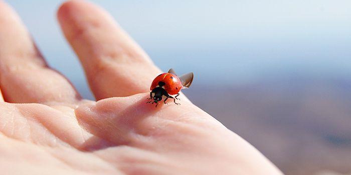 てんとう虫と恋のおまじない